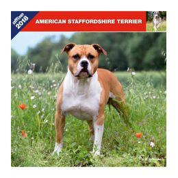 American Staffordshire Terrier calendar