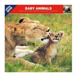 Calendrier Bébés animaux