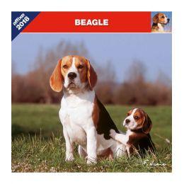 Calendrier Beagle
