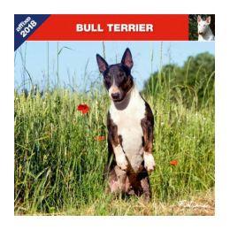 Calendrier Bull Terrier