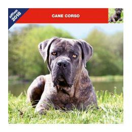 Cane Corso calendar