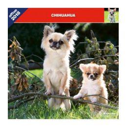 Calendrier Chihuahua