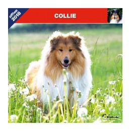 Collie calendar