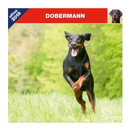 Calendrier Dobermann