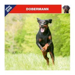 Dobermann calendar