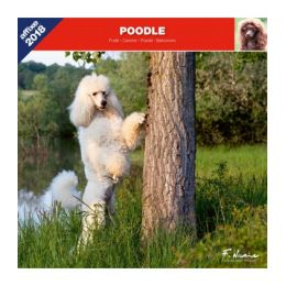 Poodle calendar