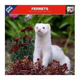 Ferrets calendar