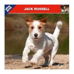 Calendrier Jack Russel Terrier