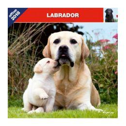 Calendrier Labrador