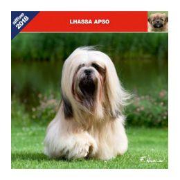 Calendrier Lhassa-Apso