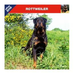 Calendrier Rottweiler