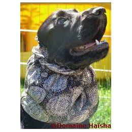 Snood - Cagoule protection oreilles tombantes - Motif médaillon noir & beige